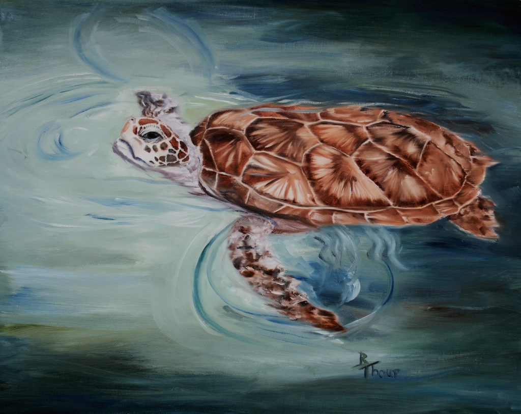 """Green Sea Turtle"""