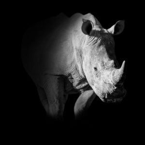 Witness the Majesty of African Wildlife Through the Lens of Cathy Withers-Clarke